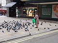 Woman feeding pigeons by Oxford Street department store - geograph.org.uk - 1186592.jpg