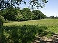 Wood at Fernhill - geograph.org.uk - 459041.jpg