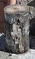 Wood stump in Vosges.jpg