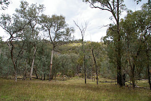 Chiltern-Mt Pilot National Park - Woodland in Mt Pilot section