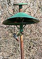 Woodpecker-and-tree-sparrow-on-birdfeeder.jpg