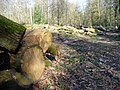 Woodpiles, Monkwood - geograph.org.uk - 368876.jpg