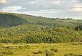 Woods near Shaugh Prior.jpg