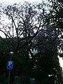 Xicranda del carrer Alfons XII P1510349.jpg