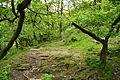Yew Tree Gorge (7518).jpg