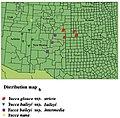 Yucca baileyi Verbreitungskarte B.jpg