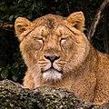 Zürich Zoo DSC 6124 2 (13364771274).jpg