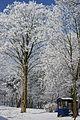 Zima 2 .jpg