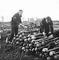Zuid-Nederland. Reportage over de gevaren van mijnen en achtergelaten munitie vo, Bestanddeelnr 901-2845.jpg