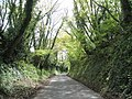 """A typical Sussex lane"" - geograph.org.uk - 788318.jpg"