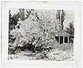 """""""Belvoir,"""" Fairfax Harrison house, Star Route 709, The Plains, Fauquier County, Virginia. Fringe tree and porch LCCN2008679258.jpg"""