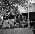 """""""Caufi"""" koruznih štrokov više na toplarjevi strešni, Beretič, Malne 1951.jpg"""