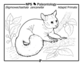 """""""Ekgmowechashala zancanelli"""" is a small lemur-like adapid primate that lived during the Oligocene. It is shown in a hackberry (c597f714-cbbc-4fe7-b4c0-fb5b5462331c).png"""