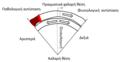 Διαφοροδιάγνωση μη συσταλτών δομών.png