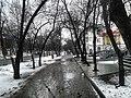Аллея ул Ленина - panoramio.jpg