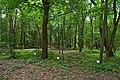 Ботанічний сад НУБіП DSC 0523.jpg