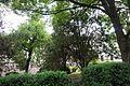 Біота східна вул. Суворова, 2.jpg