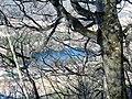 Деревья и озеро.jpg