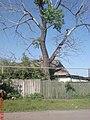 Заброшенный дом, заброшенное дерево - panoramio.jpg