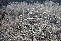 Морозный день. 35-я Таллинская ордена Красной Звезды Бригада связи. Коченёво. Новосибирская обл. Ноябрь 2015 - panoramio.jpg