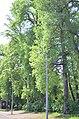 Наводницкий парк в Киеве. Фото 29.jpg