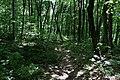 Парк Трощанський. Грабовий ліс. 28.05.2017.jpg