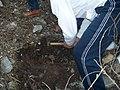 Подготовка гербария в национальном парке (Турция)-02.JPG