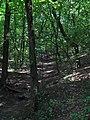 Подъем на гору - короткая дорога -) - panoramio.jpg