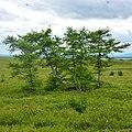 Район хребета Наун-пэ, Ямал - panoramio (5).jpg