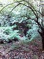 Смоларски водопад 42.jpg
