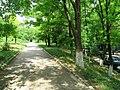 Солнечный. 4 июня 2013г. - panoramio (35).jpg