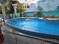 Сочинский дельфинарий парка «Ривьера». 17.jpg