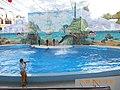 Сочинский дельфинарий парка «Ривьера». 71.jpg
