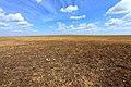 Степь в северном направлении - panoramio (1).jpg