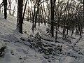 Украина, Киев - Голосеевский лес 85.jpg