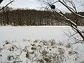 Украина, Киев - Голосеевский лес 94.jpg