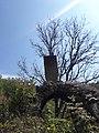 Եկեղեցի Չափնիում5.jpg