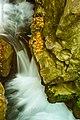 בניאס ונחל שניר 2014 144.jpg