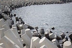 رفتار مرغان دریایی نوروزی یا یاعو در کشور عمان، شهر مسقط، ساحل دریای عمان - عکس مصطفی معراجی 23.jpg