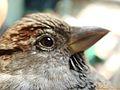 طيور الحياة.jpg