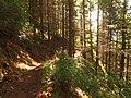 松林小径 - Path through Pines - 2012.08 - panoramio.jpg