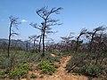 枯树 - Dead Trees - 2014.07 - panoramio.jpg