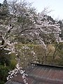 桜(杉山) - panoramio (1).jpg