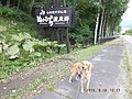 糠平温泉 - panoramio (1).jpg