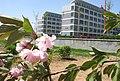 莱芜市第一中学 - panoramio.jpg