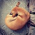 -dog -street -streetphotography -dhaka -bluecube (28478092634).jpg