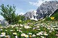 02 Musli Berisha, miber, Loja e ngjyrave ne Valbone.jpg