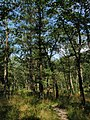 15 Lookout Trail, Pinery Provincial Park.jpg