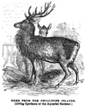 1862 deer Aquarial and ZoologicalGardens Boston Ballous.png