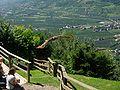 2008 07 15 Bird Care Centre of Castel Tyrol 60855 D9824.jpg